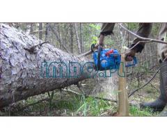 Лесничий чистка леса