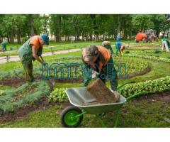 Садовник и дворник (2 человека)